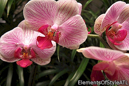 Orchid Growing Tips # 8