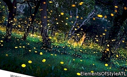Elkmont Fireflies in den Smoky Mountains